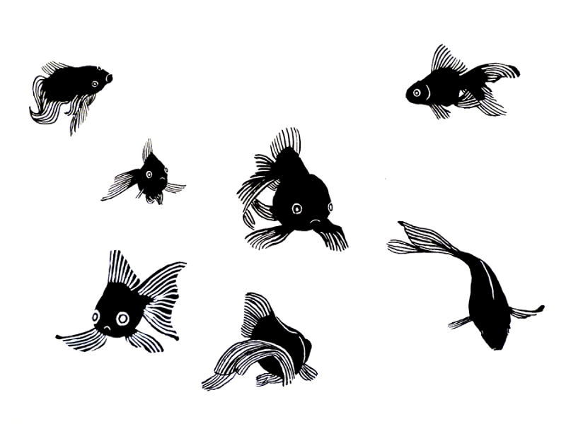 alinaerium-illustration-poisson-rouge